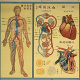 Understanding Human Body (Chinese Health Posters)
